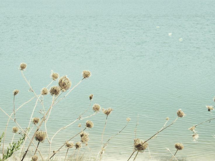 Wind flowers - I. Mereu