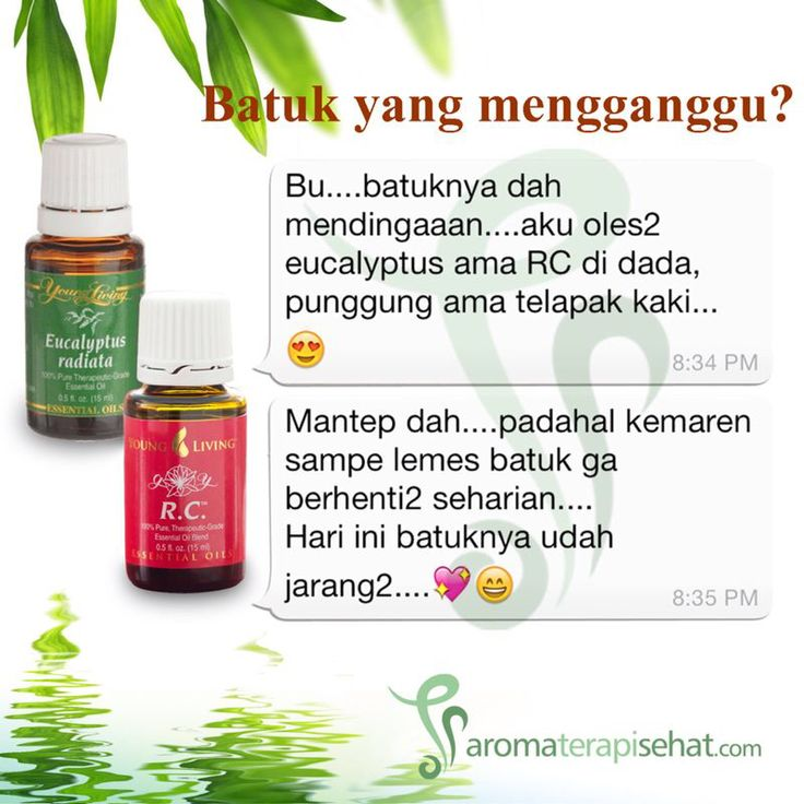 RC dan Eucalyptus Radiata