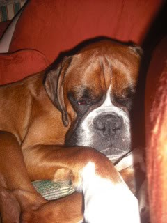 Happy Endings 2009 - Boxer Dog Rescue Northern England