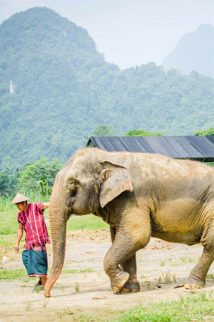 Elephant Hills Glamping With Elephants In Southern Thailand