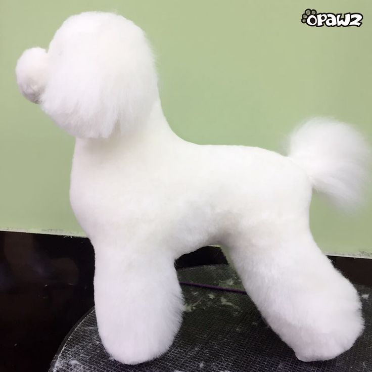 OPAWZ special designed Model Dog with wig, a good way to display trimming and coloring (temporary colors only) skills, as well as for grooming students practice. More information, please visit:http://www.opawz.com/value-packs/opawz-model-dog-with-wig-value-pack.html