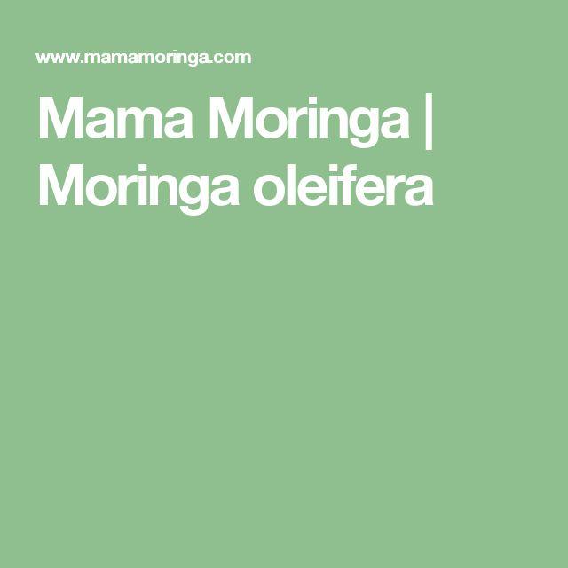 Mama Moringa | Moringa oleifera