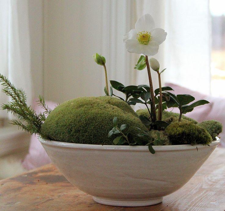512 Best Grown In Pots Decor Images On Pinterest