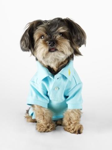 Classic Ralph Lauren Dog Polo   $24