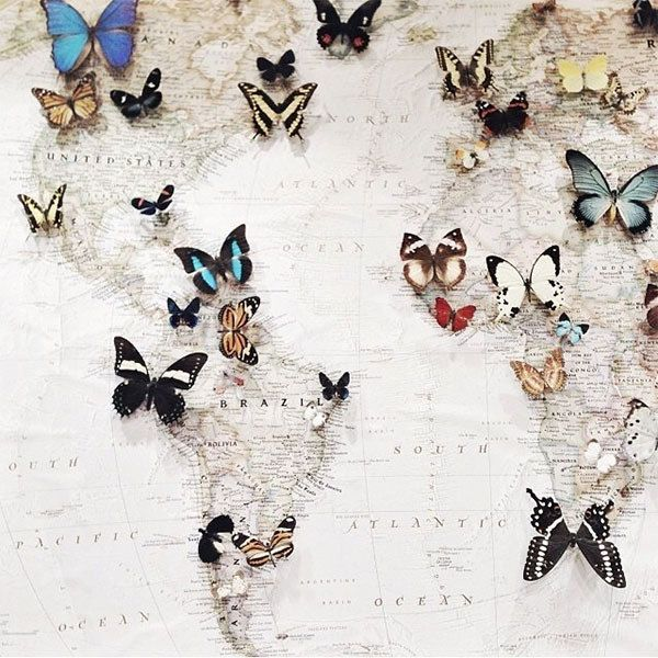 Bucket list item: Visit the native habitat of every butterfly in the world.