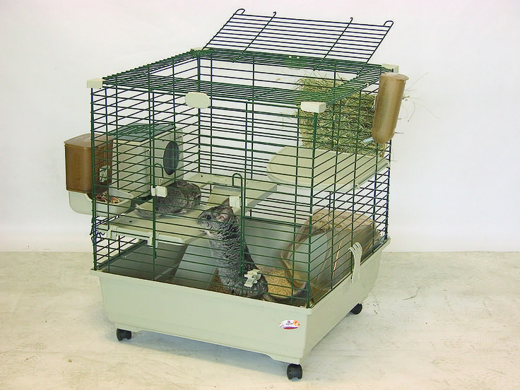 CHINCHILLA KIT