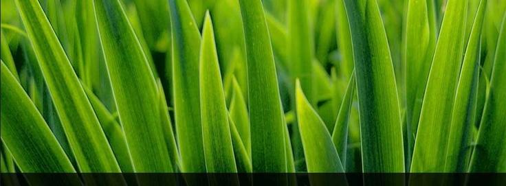 Les produits offerts sont 100% naturels, biodégradables et plus qu'efficaces! On entretient vos surfaces autant que l'environnement!