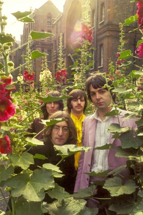 The Beatles Relax Outside In A Bed Of Red Flowers Click On Pic