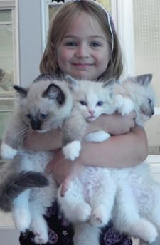 Ragdoll Cats and Kittens from CashmereRags- I so want one of these kittens but they are soooo expensive =(