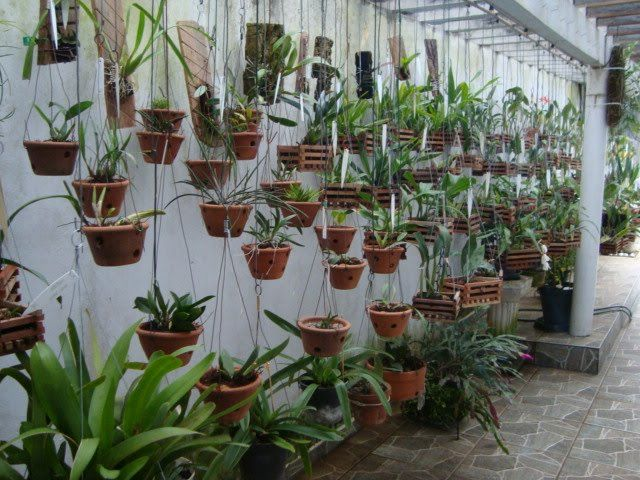 Para cultivar e manter orquídeas bonitas e saudáveis é preciso dedicar-lhes alguns cuidados especiais. O local que escolhe para colocá-las é um dos principais fatores que pode fazer toda a diferença no desenvolvimento das mesmas.