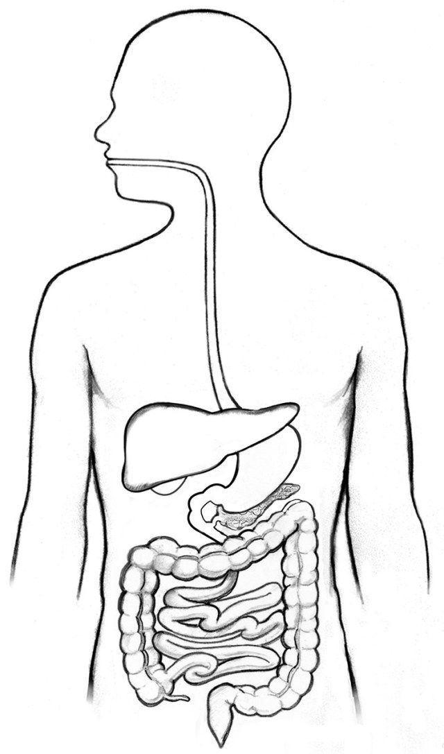 Digestive System Diagram Unlabeled