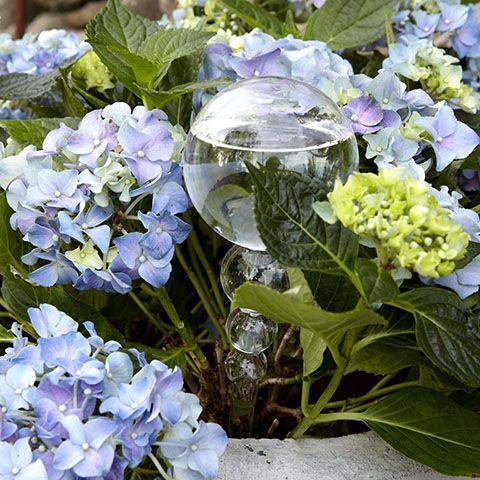De un ajutor necontenit aceasta pipeta iti va fi ca o buna prietena! Cand vei pleca in vacante vei avea cui sa-i lasi in grija florile!
