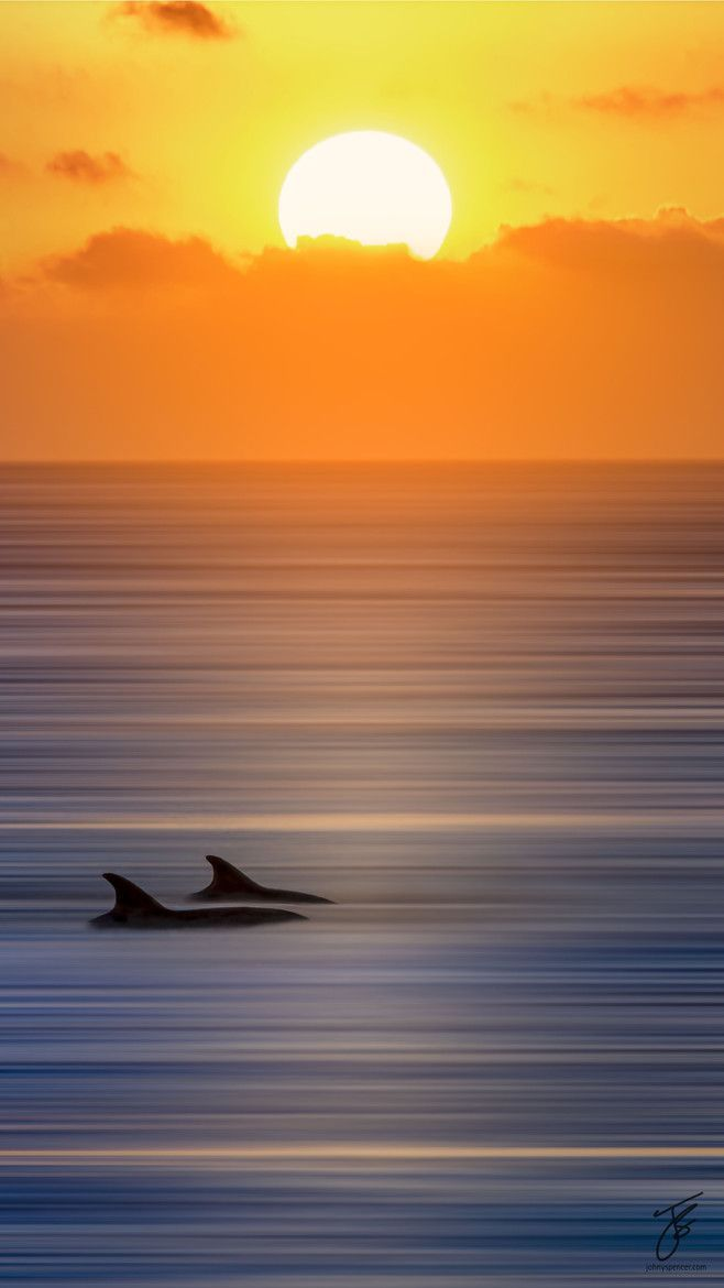 seeing Dolphins is the best! Love to see this when I am relaxing on Wiggins-Pass state park beach in Naples Fl.. <3