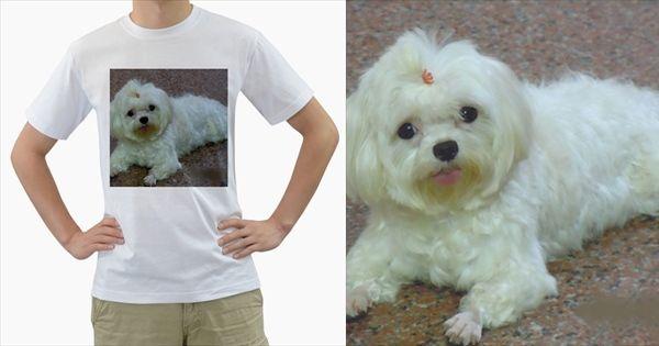Maltese+Laying+Men's+T-Shirt+(White)+