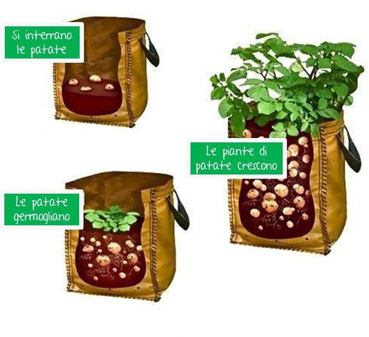 Come coltivare nei sacchi le patate