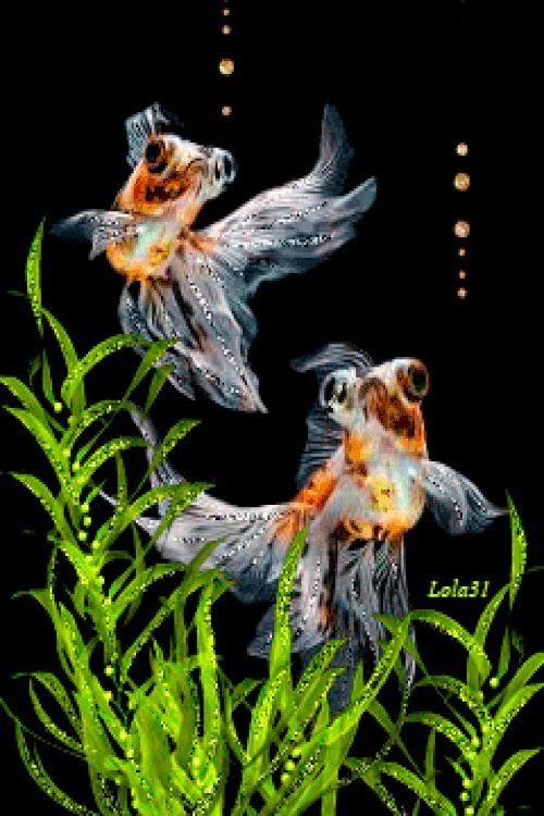 Картинки двигающиеся с рыбками
