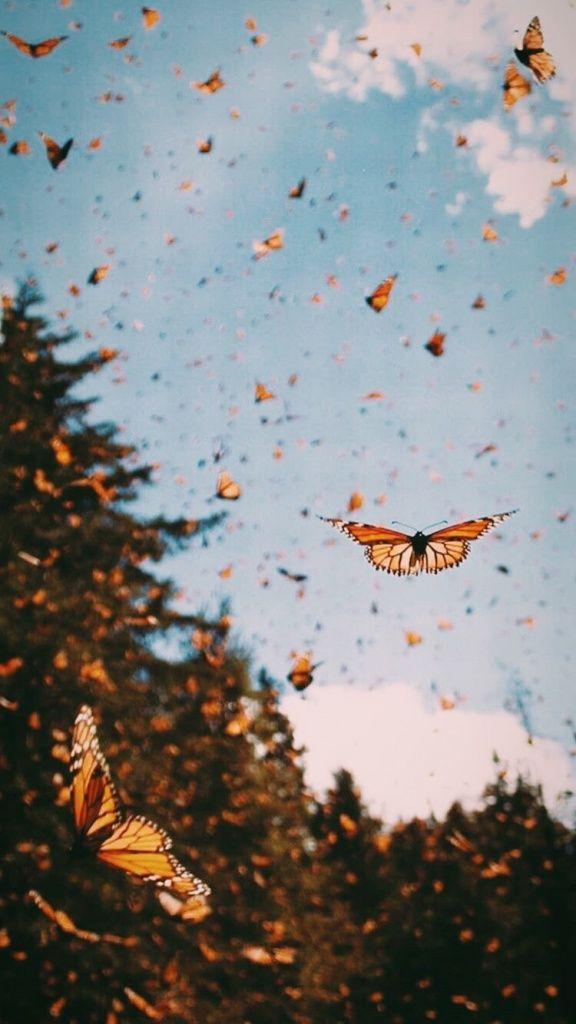 Goodvibes Vsco Vsco In 2020 Butterfly Wallpaper Iphone Blue Butterfly Wallpaper Iphone Background Wallpaper