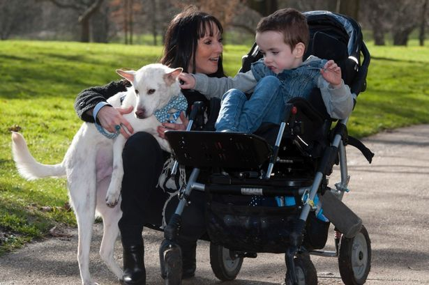 Trending Celtic FC Rangers FC Record FC Sunday Mail Viral Videos      Property     Business     Motoring     Travel     Lifestyle      Home     News     Scottish News     Pets  Dog rescued from illegal meat trade forms special friendship with disabled six-year-old boy  http://dailyrecord.newswireaccess.com/dog-rescued-illegal-meat-trade-5218474