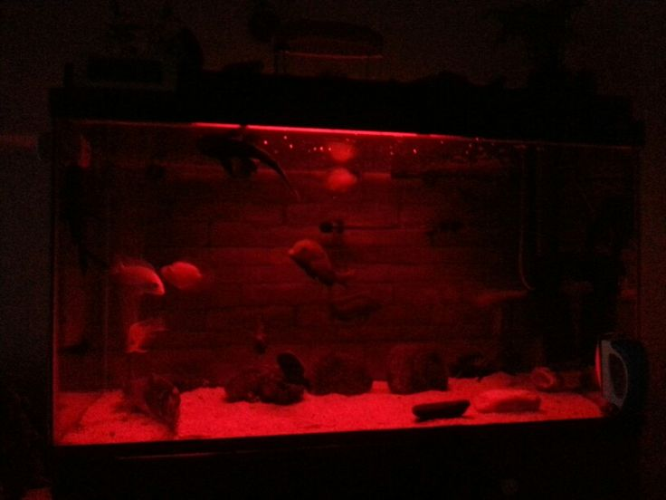 My aquarium with red led light