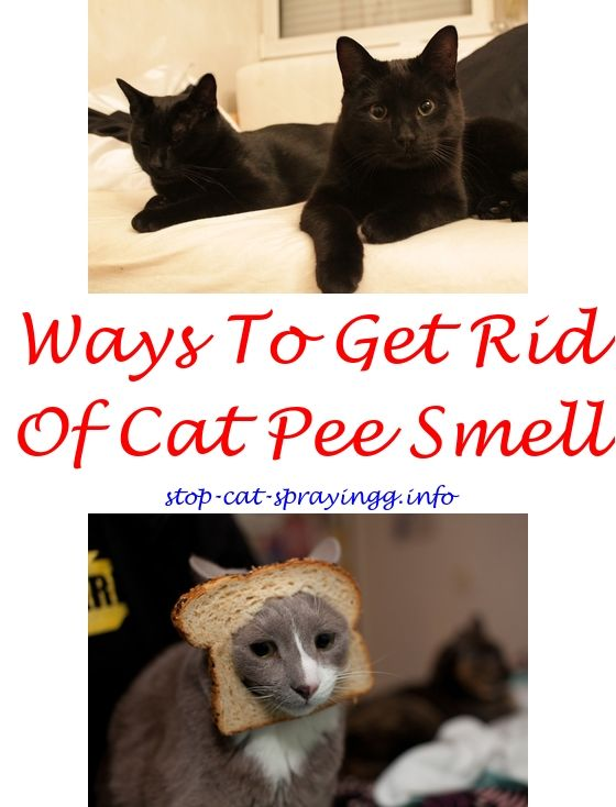 Ordinaire Cat Potty Training Spray.Applying Frontline Spray To Cats.Best Cat  Deterrent Spray For Furniture   How To Stop Cat Spraying?