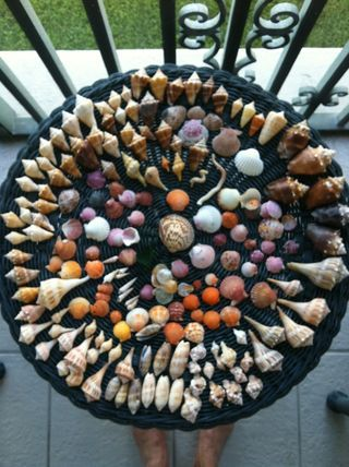 Awesome table of shells from Sanibel, FL.