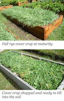 20 best images about crop rotation and cover crops on - Cover crops for vegetable gardens ...