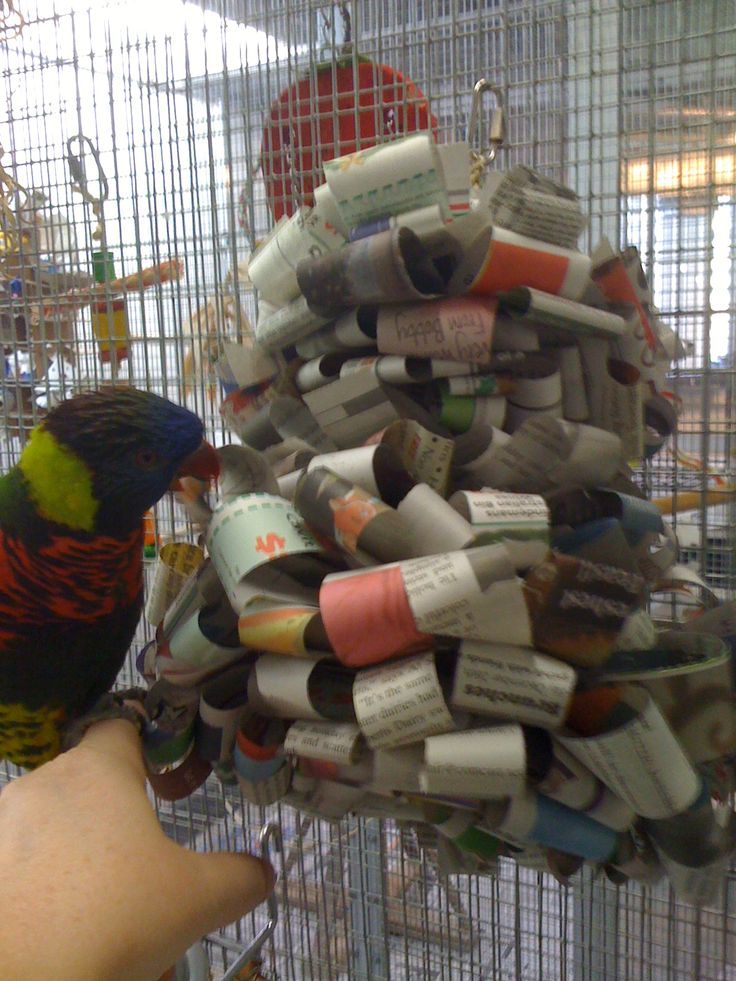 Bird Enrichment Toys : Best parrots images on pinterest