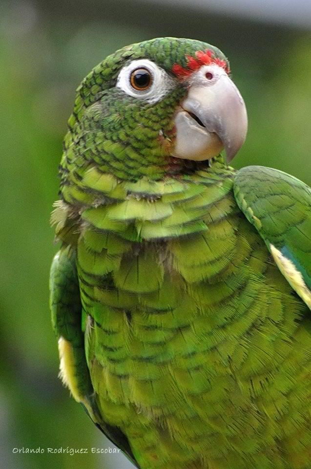 Mejores 64 im genes de el yunque en pinterest puerto rico loros y amazona - Volar a puerto rico ...