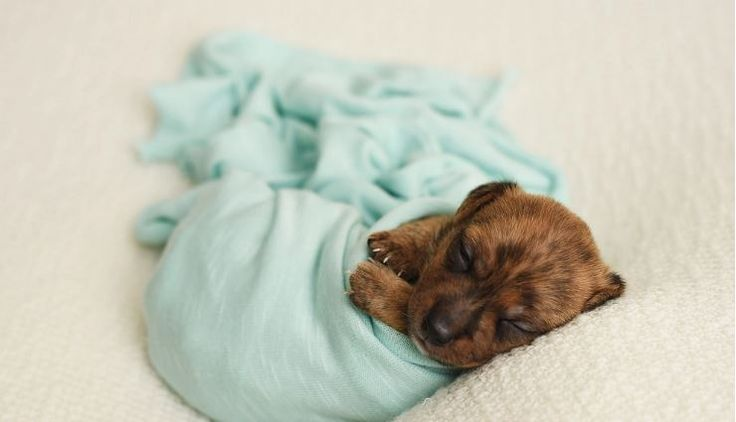 Shelter Puppies Get The Newborn Photoshoot The World Needs Right Now