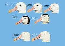 Beak types