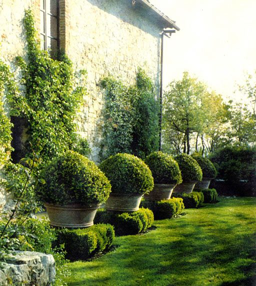 Potted boxwoods garden pinterest topiaries pots and for Topiary garden designs