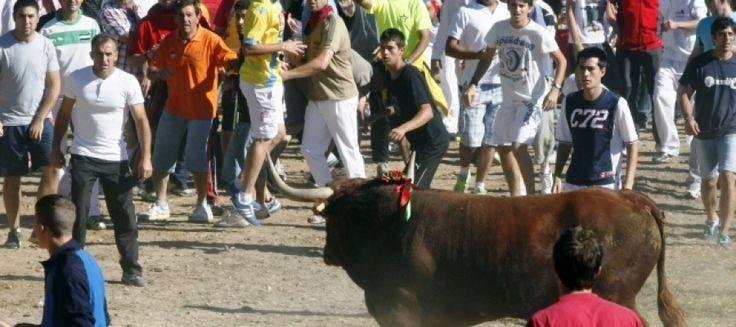 Hoy jueves conocíamos la noticia, el Consejo de Gobierno de la Junta de Castilla y León ha aprobado un decreto ley que prohíbe matar reses de lidia en espectáculos taurinos populares, lo que equivale a prohibir el alanceamiento y muerte del Toro de la Vega. Un paso importante en la lucha contra el maltrato de los animales en España.  Esta frase, que queremos reseñar porque puede ser aplicada a otros 'espectáculos' hasta hoy permitidos, ha manifestado esta mañana el consejero de Presidencia…
