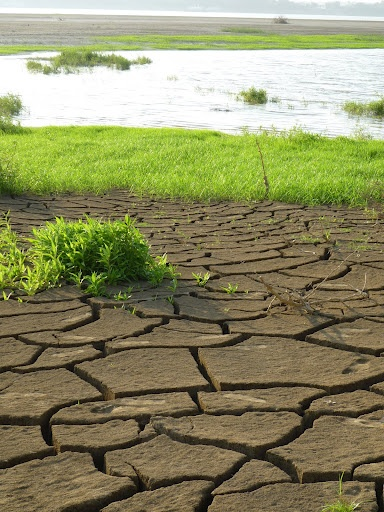 Dried cracked soil at the river's edge.