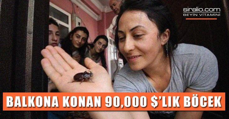 BALKONA KONAN 90 BİN DOLARLIK BÖCEK