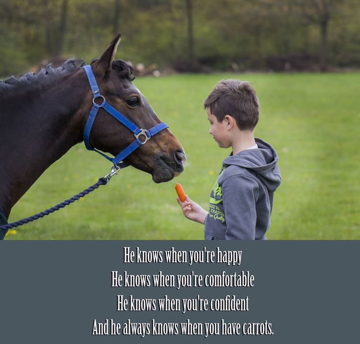 horse quote, pony quotes, quote, carrots, equine, pony, rider, horse care