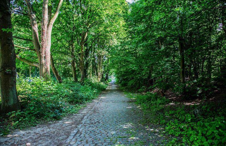 [Bruxelles] Encore découvrir sa ville et ses espaces verts... découvrir la ville comme la campagne en suivant les chemins de la promenade verte... Ici le long du cimetière de Bruxelles à Evere. #brussels #bruxelles #bruxellesmabelle #promenadeverte #bruxellesverte #igersbrussels #belgium #belgique #igersbelgium #picoftheday #photodujour #defi365 #canon #canonphoto #green #instatravel #travelgram #travel #travelphotography #promenade #evere