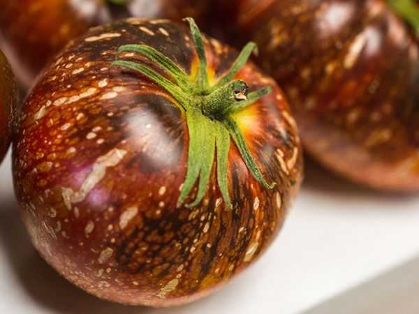 A Delicious Galatic Beauty-- With mottled skin resembling a scene  from deep space, each fascinating fruit depicts the depth and beauty of  the night sky. Dark Galaxy bears 2-8 ounce fruits that are flattened, with red  and orange stripes covered in rando