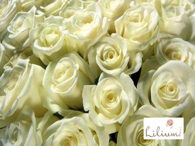 Las 25 mejores ideas sobre significado de rosas blancas en - Significado rosas blancas ...