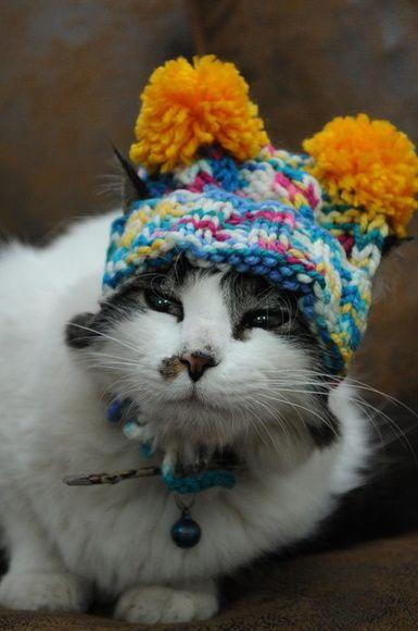 Uma Toquinha de lã para gato e cachorro.                                                                                                                                                                                 Mais