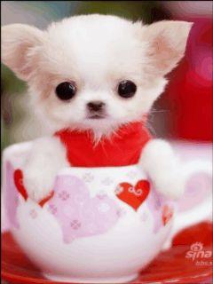 Fotos animadas con perritos.