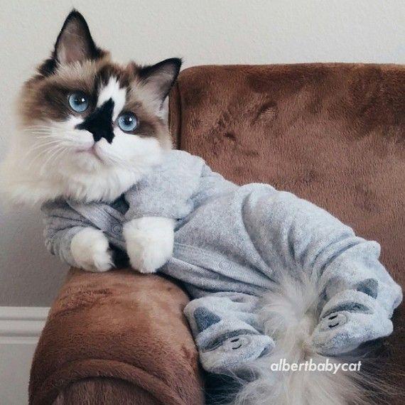 Meine Mutter hatte keine Kinder, soooo Munchkin-Katzen-Pyjamas!   – kittens