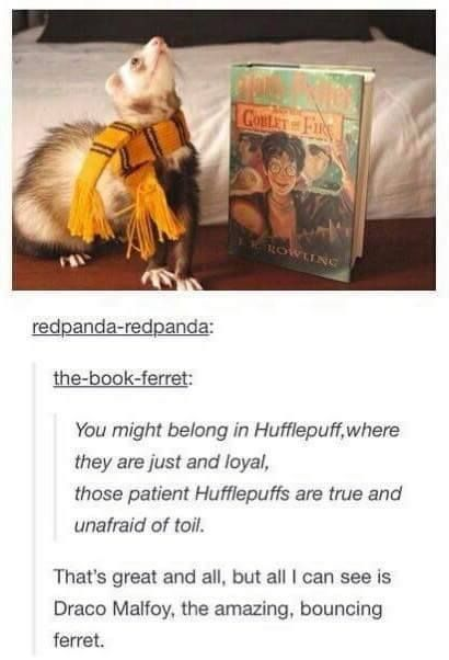 Draco, why are you wearing a hufflepuff scarf. You're disgracing your slytherin pride