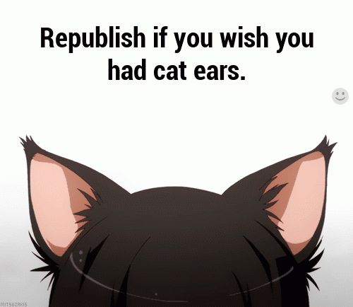 My parents always say they wish I was born with ears and a tail because my face is always so expressionless.