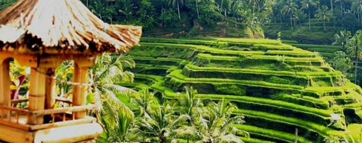 Besakih Kintamani Bali Tour Package is Bali Private Tour package to visit some places interest in Bali in one day. If you have an affinity for a trip to visit montain and bigest temple in bali located in karangasem this package will be the right choise.