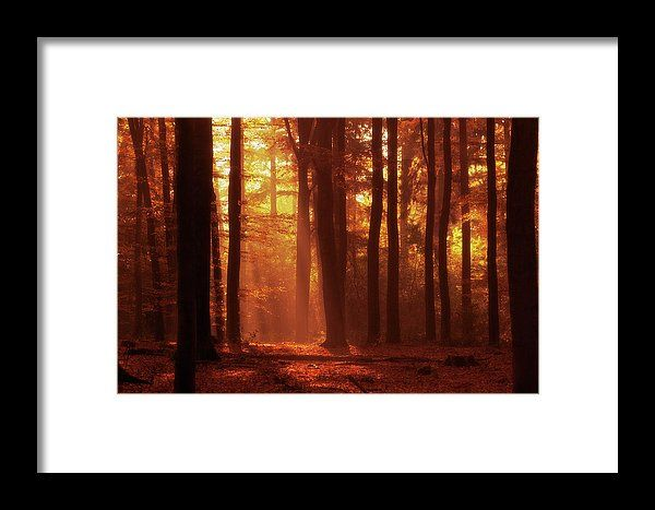 A walk in the Forrest, landscape photo as wall art #netherland #Enschede #landscape #photo #photography #gerhardhoogterp #wallart