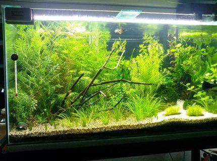 30 Gallon Fish Tanks (page 29) | RateMyFishTank.com