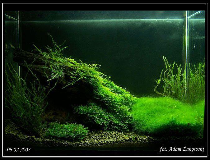 aquarium terrarium planted aquarium aquarium fish terrariums mini ...