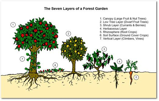 Why Food Forests? Nature grows in a highly optimised pattern, utilising multiple layers and making the most of both horizontal and vertical space.