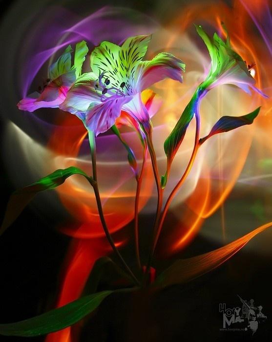 обмена красивые необычные цветы картинки анимация невероятно красивой росписи