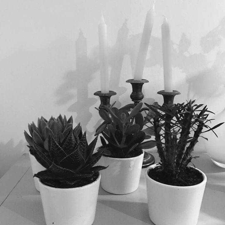 Plants of love @csanchez #love #plants #paris #bergamotte #bnw #noiretblanc